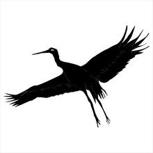Stork, Bird With Spread Wings