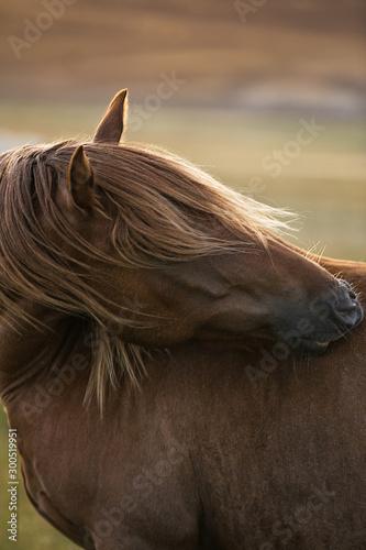 Cuadros en Lienzo  Wild Horses