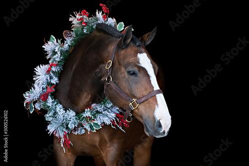 Fototapeta Christmas Horse obraz