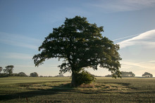 Solitary Tree In Different Lig...