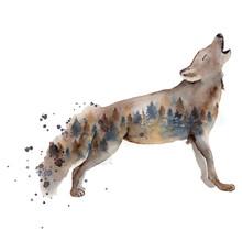 Watercolor Wolf Illustration W...
