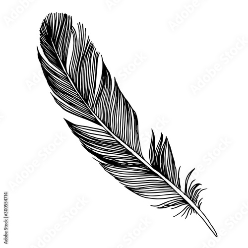 Valokuvatapetti Vector bird feather from wing isolated