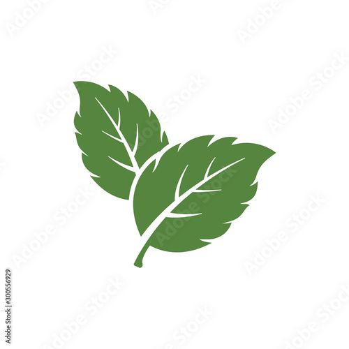 Obraz mint leaf element vector icon. green mint leaves vector symbol - fototapety do salonu