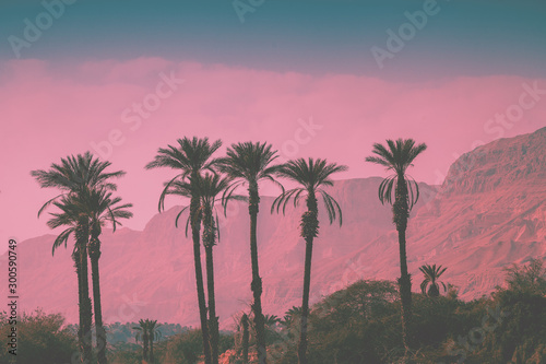 A row of tropic palm trees against mountains. Silhouette of tall palm trees. Tropic evening landscape. Beautiful tropical nature