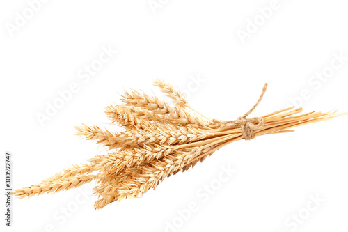 Fototapeta Sheaf of wheat ears isolated on a white background obraz