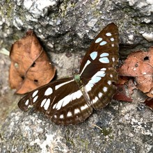 Beautiful Butterfly On A Rock Composition