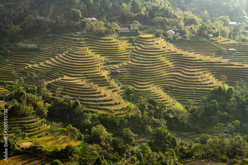 Spoed Fotobehang Rijstvelden Terraced rice field
