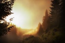 Fantastically Beautiful Foggy ...