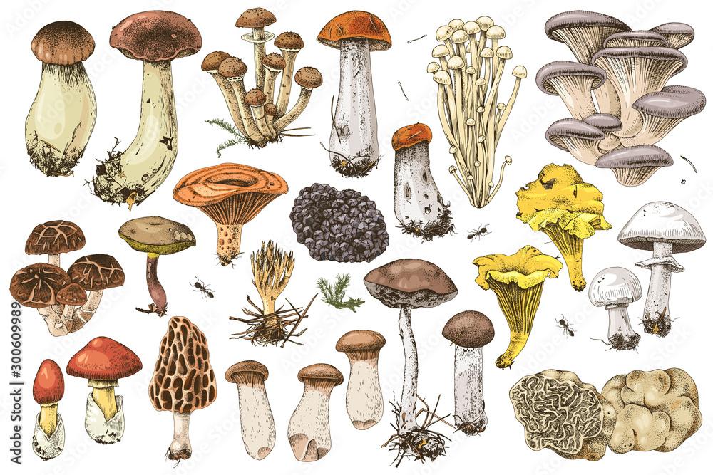 Ręcznie rysowane jadalne grzyby kolekcja