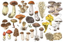 Hand Drawn Edible Mushrooms Collection