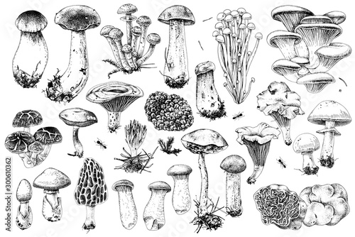 Fotografia Hand drawn edible mushrooms collection