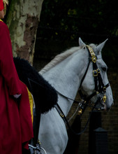 White Horse Of The Royal Guard