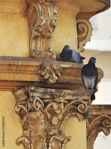 Two gray pigeons: one is perching on the architrave of an old building and the other is on the Corinthian style capital of a column Canvas Print