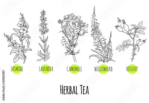 Photo Vector set of green herbs and plants sketches: jasmine, lavender, chamomile, willow herb and rose hip