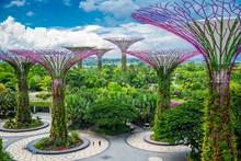 Singapore Landscape 09
