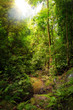 canvas print picture - Beautiful landscape view of the rainforest during a ecotourism jungle hike in Gunung Leuser National Park, Bukit Lawang, Sumatra, Indonesia