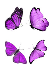 Beautiful Butterflies Isolated On White Background