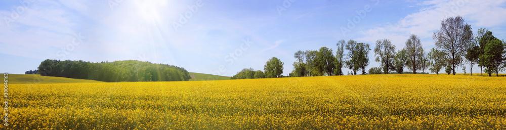 Fototapety, obrazy: Frühsommerliche Sonne über weiter Landschaft, Panorama
