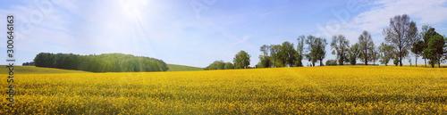 Garden Poster Blue sky Frühsommerliche Sonne über weiter Landschaft, Panorama