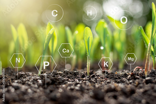 Corn seedlings are exuberant from abundant soil with various minerals and have the iconic technology needed for plant growth Canvas Print