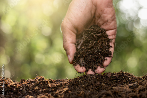 Fotomural  The hands of the agricultural men are picking the best soil for planting