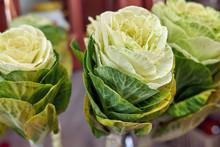 White Brassica, Flowers Simila...