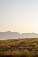 Landscape Africa