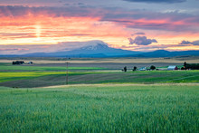 Western USA Countryside Sunset: Rolling Fields And Expansive Farmland With A Snow-capped Mountain In The Distance At Sunset - Washington, USA