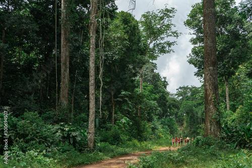 Photo Ramal Principal da Reserva Extrativista Chico Mendes em Xapuri, Acre