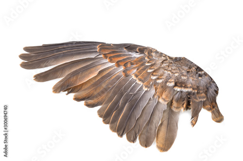 Wing bird isolated on white background
