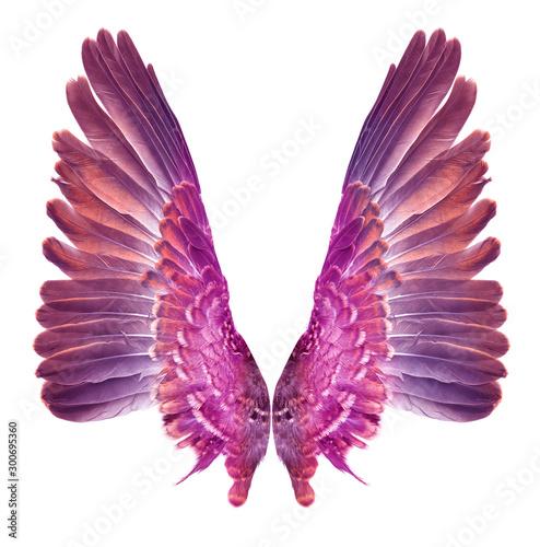 Fotografie, Obraz  Wing bird isolated on white background