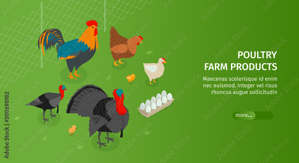 Fototapety, obrazy: Poultry Farm Products Banner