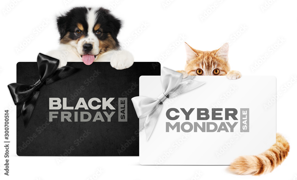 Fototapety, obrazy: puppy dog and cat pets together showing  black and silver gift card with black friday and cyber monday text isolated on white background blank template and copy space