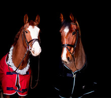 Portrait Of Two Beautiful Hors...