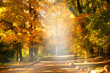 Empty Path Road In Park With Autumnal Trees With Yellow Fall Leaf Foliage. Outdoor Botanical Garden Relaxation, Travel To Fairytale, Journey Into Fabulous Golden Autumn Forest.