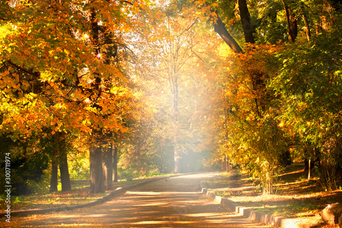 Fototapeta jesień   empty-path-road-in-park-with-autumnal-trees-with-yellow-fall-leaf-foliage-outdoor-botanical-garden-relaxation-travel-to-fairytale-journey-into-fabulous-golden-autumn-forest