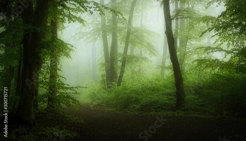 Foto auf Acrylglas Wald im Nebel Frühlingsmorgenwald