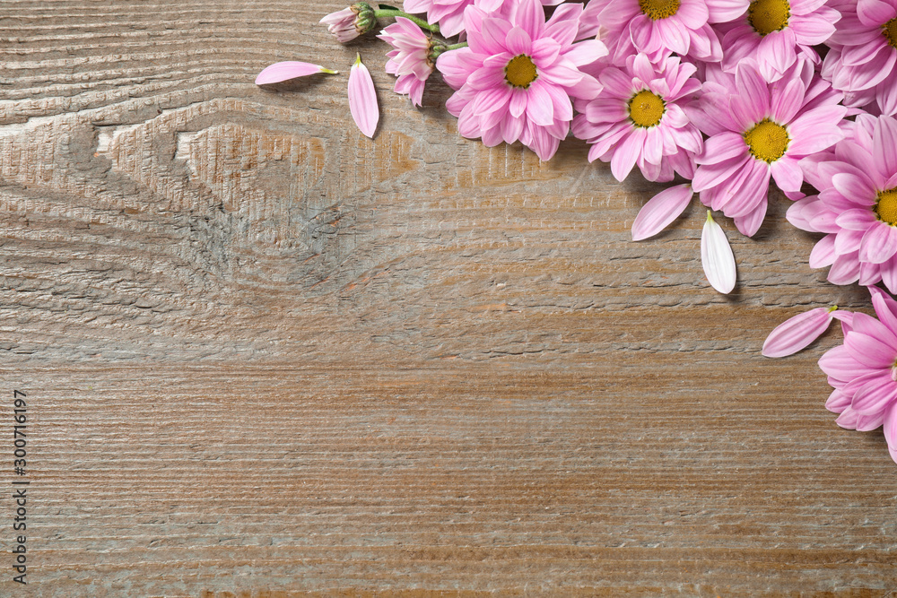 Fototapeta Beautiful pink chamomile flowers on wooden background, flat lay. Space for text