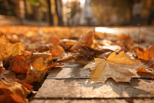 Dry Leaves On Paved Street In Sunny Autumn Park, Closeup