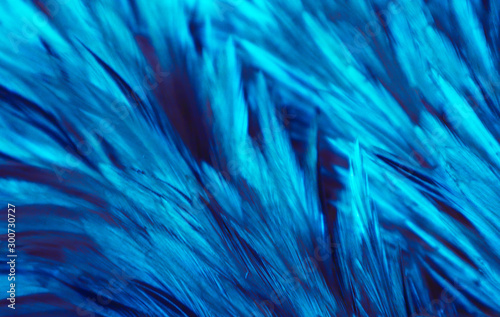 Beautiful abstract colorful white and light green feathers on dark background and soft white blue feather texture on white pattern