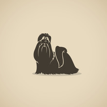 Shih Tzu Dog - Isolated Vector...