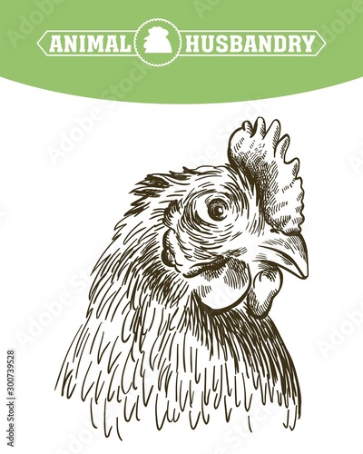 Foto chicken breeding