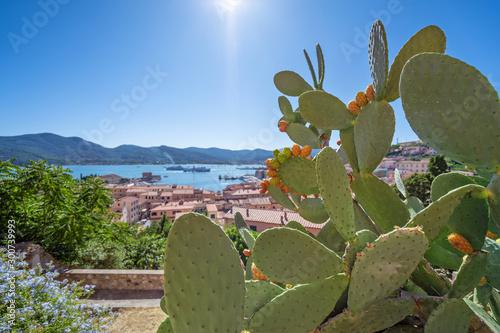Cuadros en Lienzo Kaktusfeige auf der Insel Elba