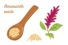 Amaranth Seeds In Wooden Spoon...