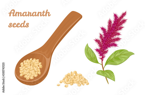 Photo Amaranth seeds in wooden spoon and branch of flowering amaranth plant isolated on white background
