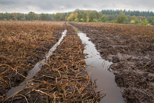 Lost Crop: Puddles In Tire Tra...