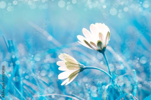 Obraz na plátně  macro de unas flores blancas en el campo