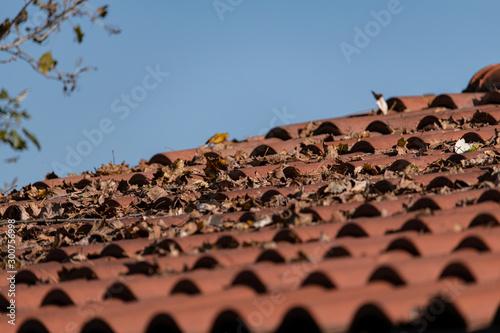 Photo Foglie secche sul tetto in coppie e tegole, autunno e tempo che passa