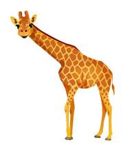 Cartoon Giraffe Isolated On A ...