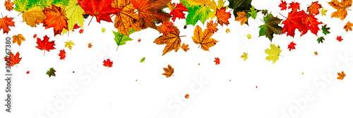 Fotomural  Leaves background. Autumn season pattern isolated on white back